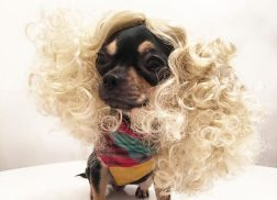 A Dog Named Dolly Pawton Has Better Style Than Anyone Ever